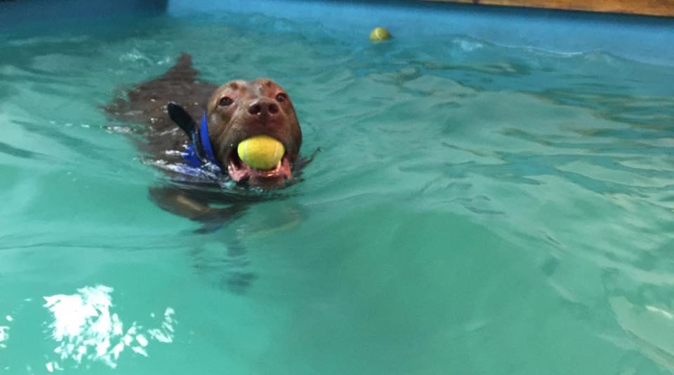 simmande hund