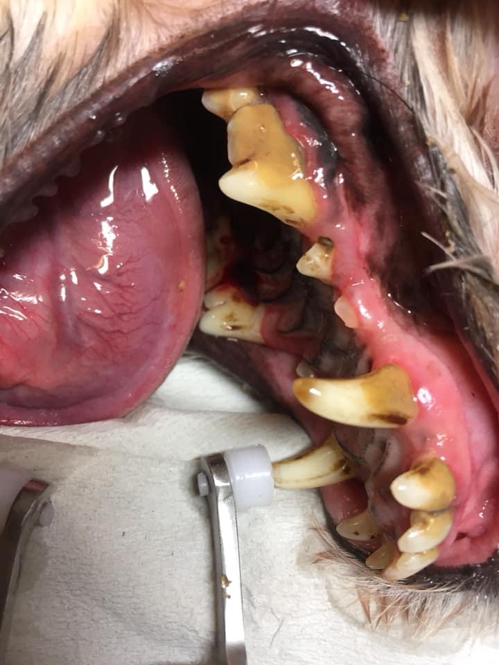 tandsten